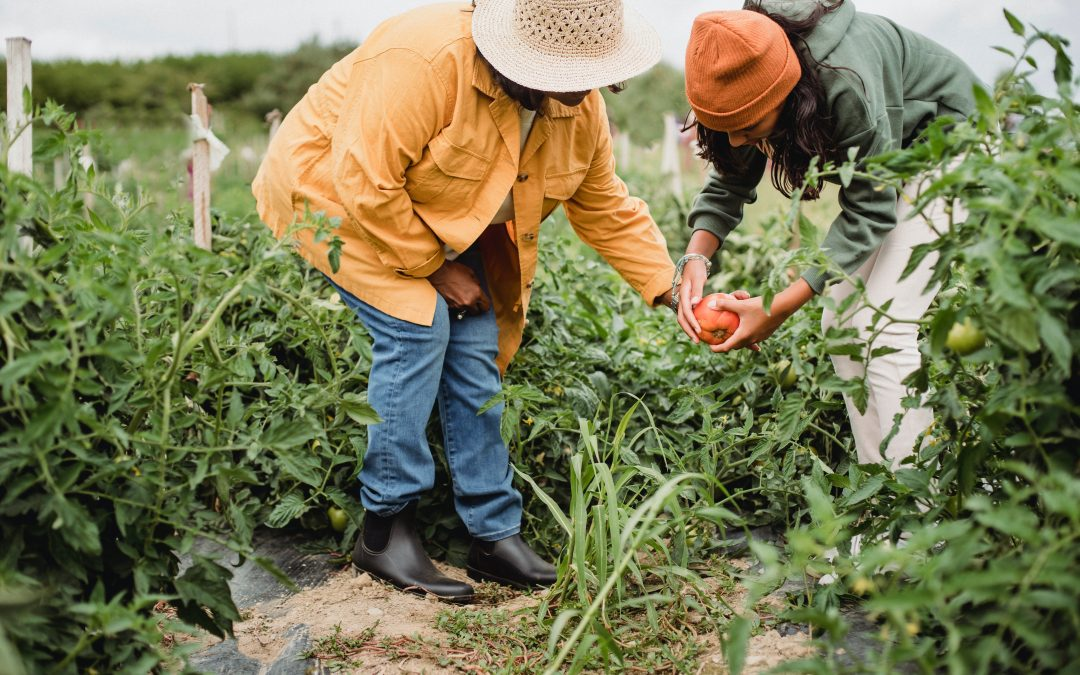 The Effects of Organic Farming on Biodiversity